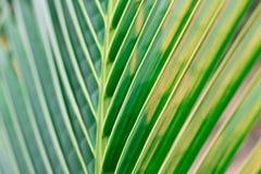 Πράσινη φύση φύλλων κινηματογραφήσεων σε πρώτο πλάνο για το υπόβαθρο Δημιουργικός φιαγμένος από πράσινα φύλλα δέντρων Στοκ φωτογραφία με δικαίωμα ελεύθερης χρήσης