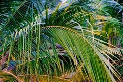 Πράσινη φύση φύλλων κινηματογραφήσεων σε πρώτο πλάνο για το υπόβαθρο Δημιουργικός φιαγμένος από πράσινα φύλλα δέντρων Φοίνικες κα Στοκ Εικόνες