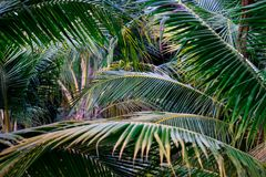 Πράσινη φύση φύλλων κινηματογραφήσεων σε πρώτο πλάνο για το υπόβαθρο Δημιουργικός φιαγμένος από πράσινα φύλλα δέντρων Φοίνικες κα Στοκ φωτογραφία με δικαίωμα ελεύθερης χρήσης