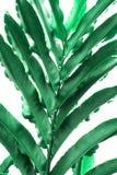 Πράσινη φύση φύλλων κινηματογραφήσεων σε πρώτο πλάνο για το υπόβαθρο Δημιουργικός φιαγμένος από πράσινα φύλλα δέντρων του αρχείου Στοκ Εικόνες