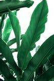 Πράσινη φύση φύλλων κινηματογραφήσεων σε πρώτο πλάνο για το υπόβαθρο Δημιουργικός φιαγμένος από πράσινα φύλλα δέντρων του αρχείου Στοκ εικόνες με δικαίωμα ελεύθερης χρήσης