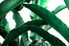 Πράσινη φύση φύλλων κινηματογραφήσεων σε πρώτο πλάνο για το υπόβαθρο Δημιουργικός φιαγμένος από πράσινα φύλλα δέντρων του αρχείου Στοκ φωτογραφία με δικαίωμα ελεύθερης χρήσης