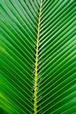 Πράσινη φύση φύλλων κινηματογραφήσεων σε πρώτο πλάνο για το υπόβαθρο Δημιουργικός φιαγμένος από πράσινα φύλλα δέντρων Στοκ Φωτογραφίες