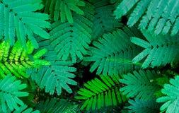 Πράσινη φύση φύλλων κινηματογραφήσεων σε πρώτο πλάνο για το υπόβαθρο Δημιουργικός φιαγμένος από πράσινα φύλλα δέντρων Στοκ Φωτογραφία