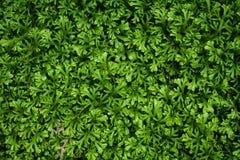 πράσινη φύση φύλλων ανασκόπη&s Στοκ Εικόνες