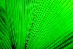 πράσινη φύση φύλλων ανασκόπη&s Στοκ φωτογραφίες με δικαίωμα ελεύθερης χρήσης