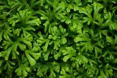 πράσινη φύση φύλλων ανασκόπη&s Στοκ Εικόνα