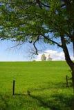 πράσινη φύση Στοκ Εικόνες