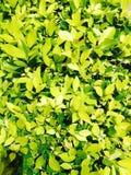 πράσινη φύση Στοκ Εικόνα