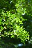 πράσινη φύση Στοκ φωτογραφία με δικαίωμα ελεύθερης χρήσης