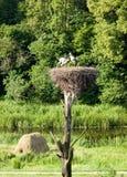 πράσινη φύση storkes Στοκ εικόνα με δικαίωμα ελεύθερης χρήσης