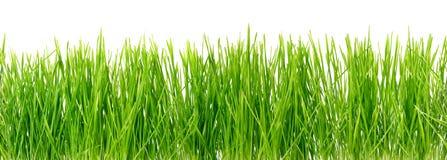 Πράσινη χλόη, άνευ ραφής ανασκόπηση Στοκ εικόνα με δικαίωμα ελεύθερης χρήσης
