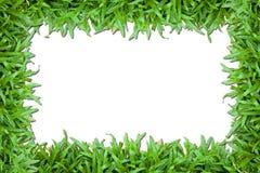 Πράσινη χλόη στοκ εικόνες