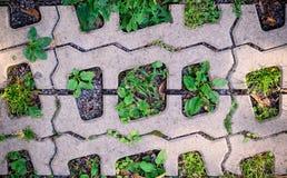 Πράσινη χλόη στις τρύπες της επίστρωσης των φραγμών Υπόβαθρο, σχέδιο στοκ εικόνες