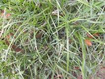 Πράσινη χλόη στον κήπο Στοκ Φωτογραφία