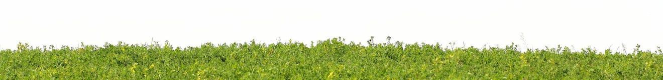 Πράσινη χλόη στον τομέα που απομονώνεται σε ένα λευκό απαγορευμένα στοκ φωτογραφίες