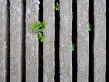 Πράσινη χλόη στο υπόβαθρο φραγμών τσιμέντου Στοκ Φωτογραφία