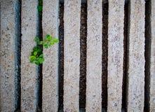 Πράσινη χλόη στο υπόβαθρο φραγμών τσιμέντου Στοκ φωτογραφίες με δικαίωμα ελεύθερης χρήσης