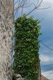 Πράσινη χλόη του σπιτιού μου Στοκ Εικόνες