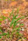 Πράσινη χλόη το φθινόπωρο Στοκ Φωτογραφία