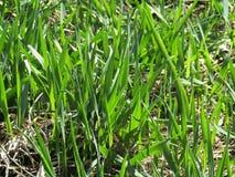 Πράσινη χλόη, φύλλα, τομέας Στοκ φωτογραφία με δικαίωμα ελεύθερης χρήσης