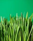 Πράσινη χλόη Στοκ φωτογραφίες με δικαίωμα ελεύθερης χρήσης
