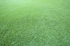 Πράσινη χρήση πατωμάτων χλόης ως φυσικό υπόβαθρο, σκηνικό και σύσταση στοκ εικόνες