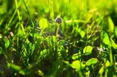 Πράσινη χλόη αναμμένη από τον ήλιο Στοκ εικόνες με δικαίωμα ελεύθερης χρήσης