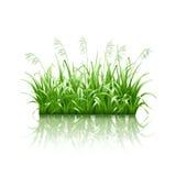 Πράσινη χλόη, διάνυσμα ελεύθερη απεικόνιση δικαιώματος