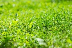 Πράσινη χλόη κάτω από τον ήλιο Στοκ Φωτογραφίες