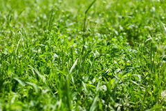 Πράσινη χλόη κάτω από τον ήλιο Στοκ εικόνα με δικαίωμα ελεύθερης χρήσης
