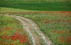 Πράσινη χλόη και κόκκινα λουλούδια Στοκ Εικόνες