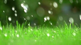 Πράσινη χλόη και μειωμένες πτώσεις του νερού, ρηχή εστίαση Έξοχο σε αργή κίνηση βίντεο, 250 fps φιλμ μικρού μήκους