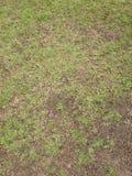 Πράσινη χλόη και ξηρά χλόη Στοκ φωτογραφίες με δικαίωμα ελεύθερης χρήσης