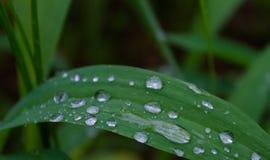 Πράσινη χλόη με τις πτώσεις νερού το πρωί Στοκ φωτογραφίες με δικαίωμα ελεύθερης χρήσης
