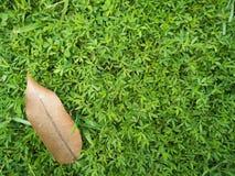 Πράσινη χλόη με το καφετί φύλλο Στοκ Εικόνα