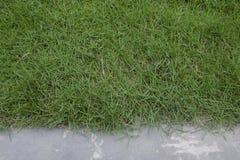 Πράσινη χλόη με το πάτωμα τσιμέντου Στοκ Εικόνες