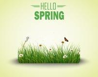 Πράσινη χλόη με το υπόβαθρο λουλουδιών και πεταλούδων διανυσματική απεικόνιση