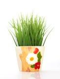 Πράσινη χλόη σε ένα κεραμικό δοχείο λουλουδιών στο άσπρο υπόβαθρο στοκ εικόνες
