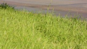 Πράσινη χλόη σε μια άκρη του δρόμου απόθεμα βίντεο