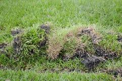 Πράσινη χλόη στο ξηρό χώμα Στοκ εικόνες με δικαίωμα ελεύθερης χρήσης
