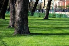 Πράσινη χλόη στο πάρκο Στοκ Εικόνα