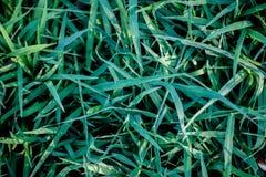 Πράσινη χλόη στο πράσινο υπόβαθρο Στοκ Εικόνες