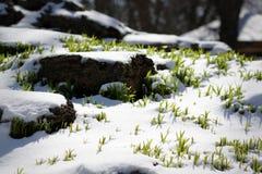 Χλόη στο χιόνι Στοκ φωτογραφίες με δικαίωμα ελεύθερης χρήσης