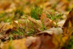 Πράσινη χλόη το φθινόπωρο Στοκ Εικόνες