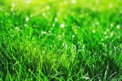 Πράσινη χλόη Στοκ Φωτογραφία