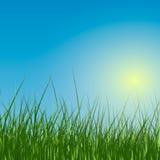 Πράσινη χλόη Στοκ εικόνες με δικαίωμα ελεύθερης χρήσης