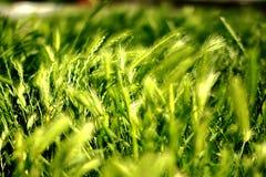 Πράσινη χλόη Στοκ Φωτογραφίες