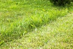 Πράσινη χλόη στοκ φωτογραφία με δικαίωμα ελεύθερης χρήσης
