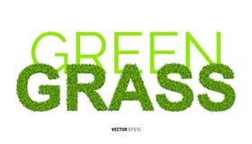Πράσινη χλόη Textute Στοκ Εικόνες